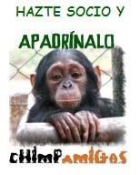 Chimpa